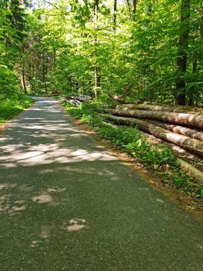 Weg im Heuchelberger Wald