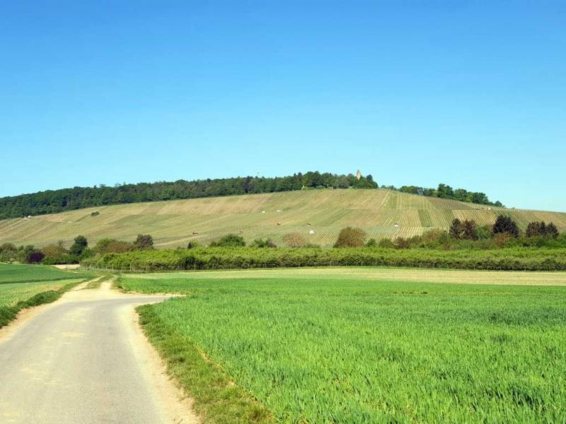 Felder und Weinberge im Vordergrund, Heuchelberger Warte im Hintergrund