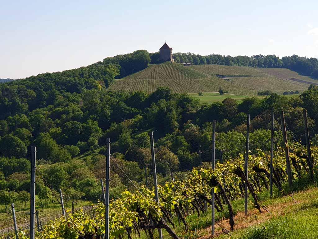 Weinberge. Im Hintergrund befindet sich die Burg Wildeck
